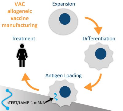 VAC allogeneic vaccine manufacturing process
