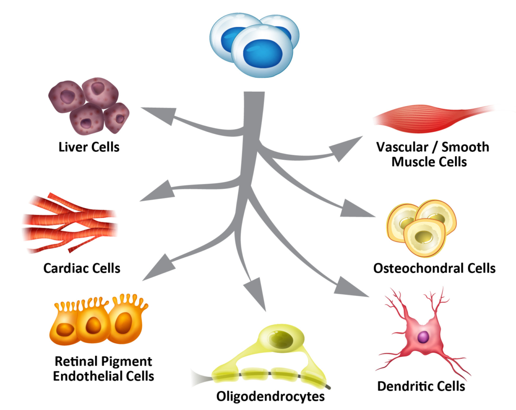 Cell Therapy - Lineage Cell Therapeutics